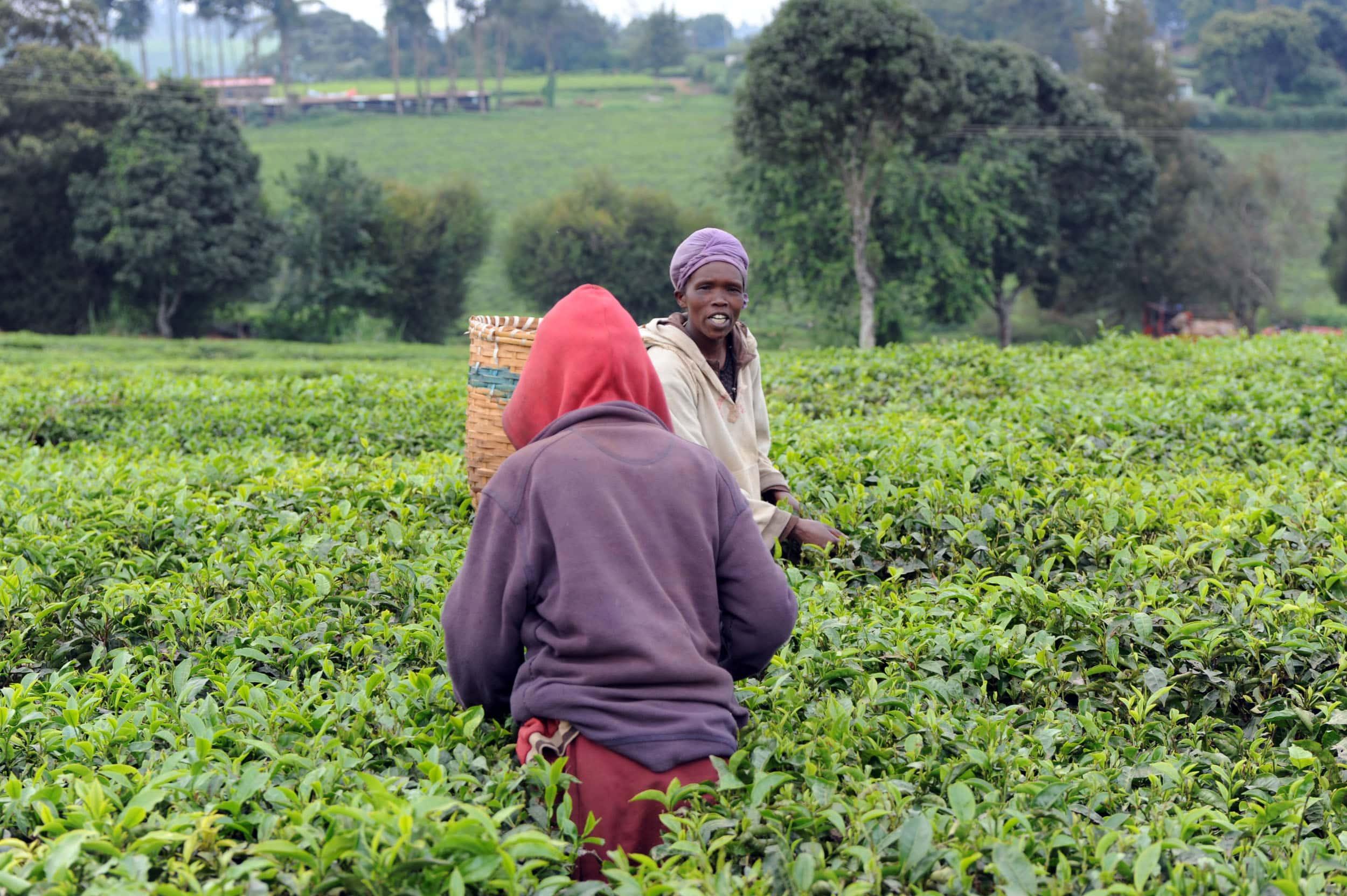 Proyecto para personas sin empleo de Nairobi
