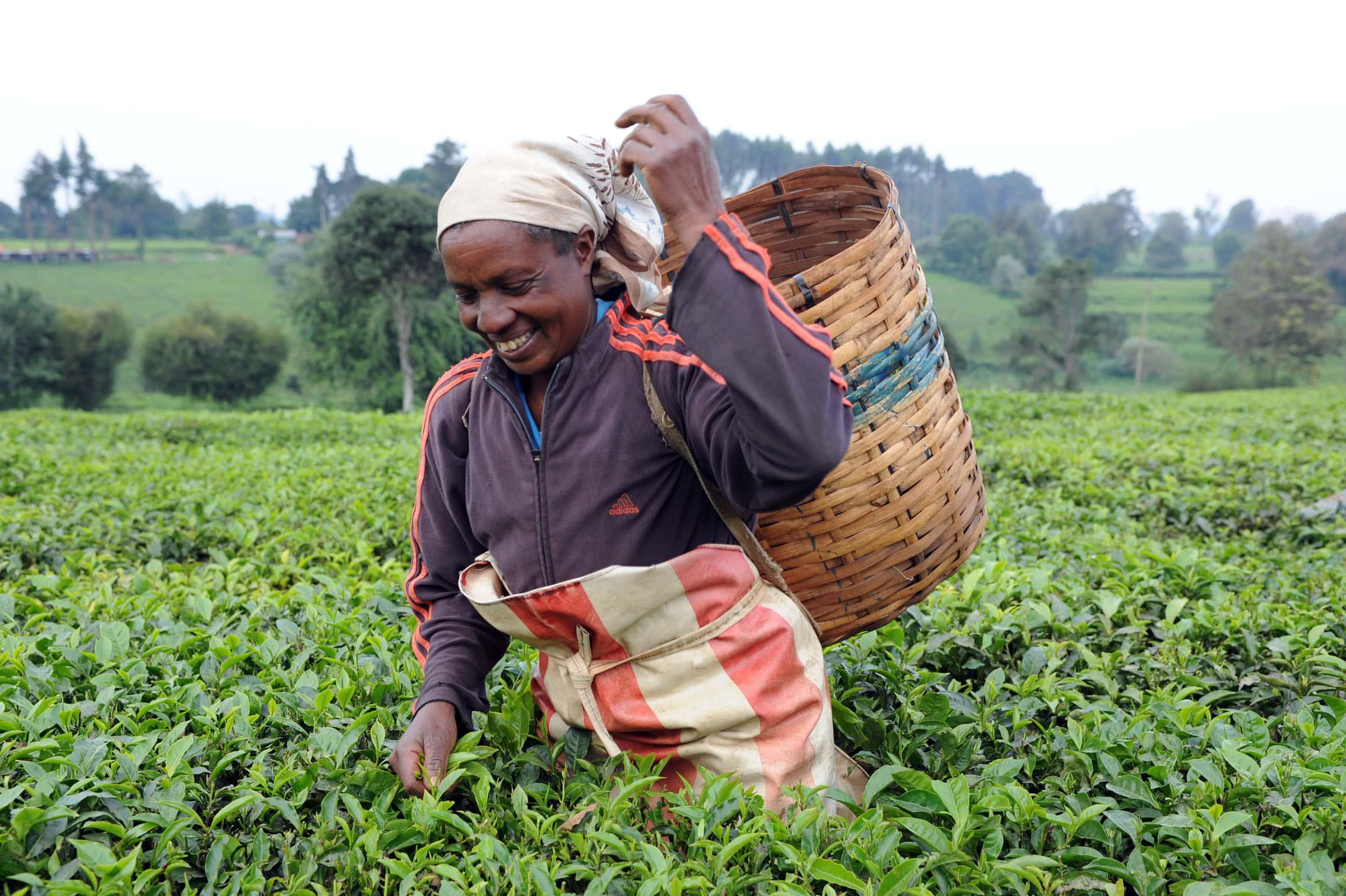 Programa de promoción y capacitación de mujeres y jóvenes en las técnicas agrícolas y ganaderas