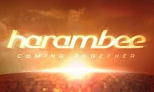 En 2012 Harambee celebra sus 10 años de actividad y pone en marcha un Comité Cultural que incorpora a dos españoles