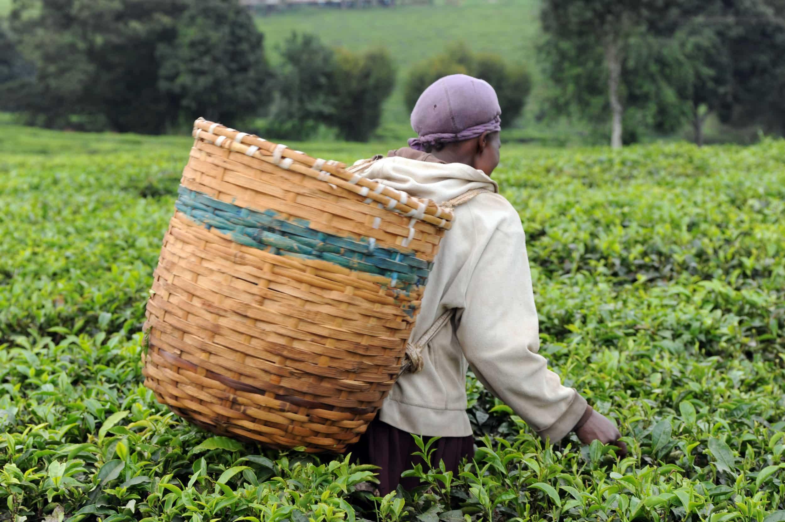 Formación agrícola en el área rural de Ndalatando