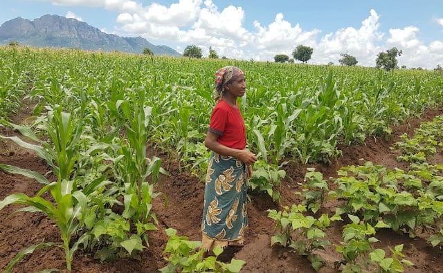 Mozambique. Seguridad alimentaria en Matambo