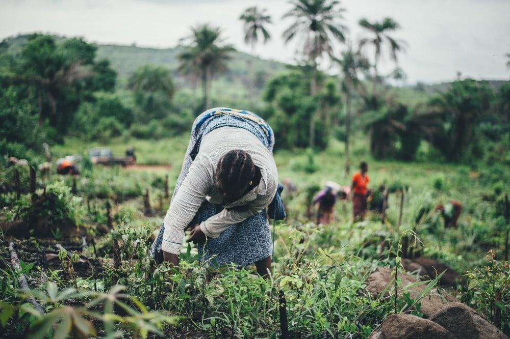 Fomentar la seguridad alimentaria promoviendo la agricultura en África